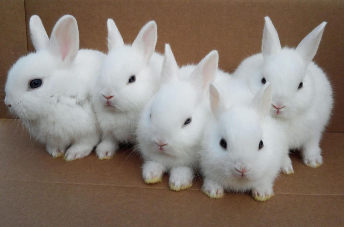 baby rabbits - Google Search | Easter | Pinterest | Rabbit ...