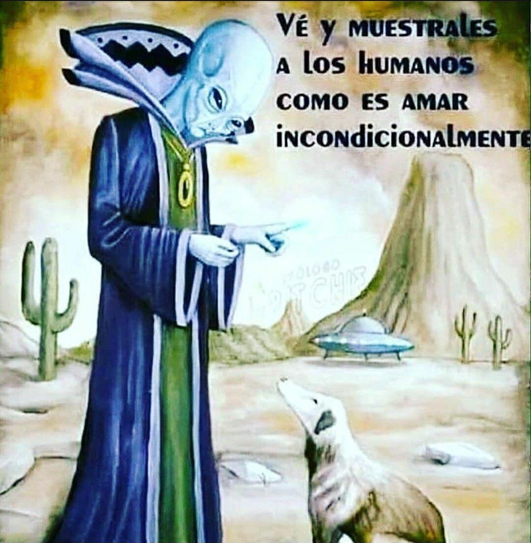 Pin De Andrea Saavedra En Nada Memes Perros Despertar Espiritual Te Amo Como Eres