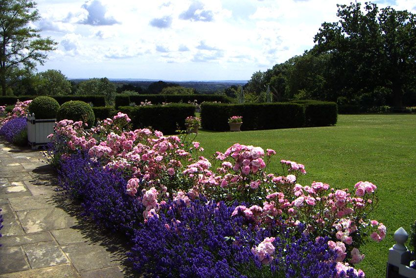 Rose and lavender border gardening outdoors for Garden design ideas lavender