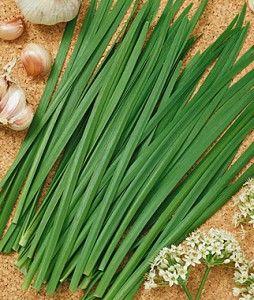 Garlic Geisha Chives
