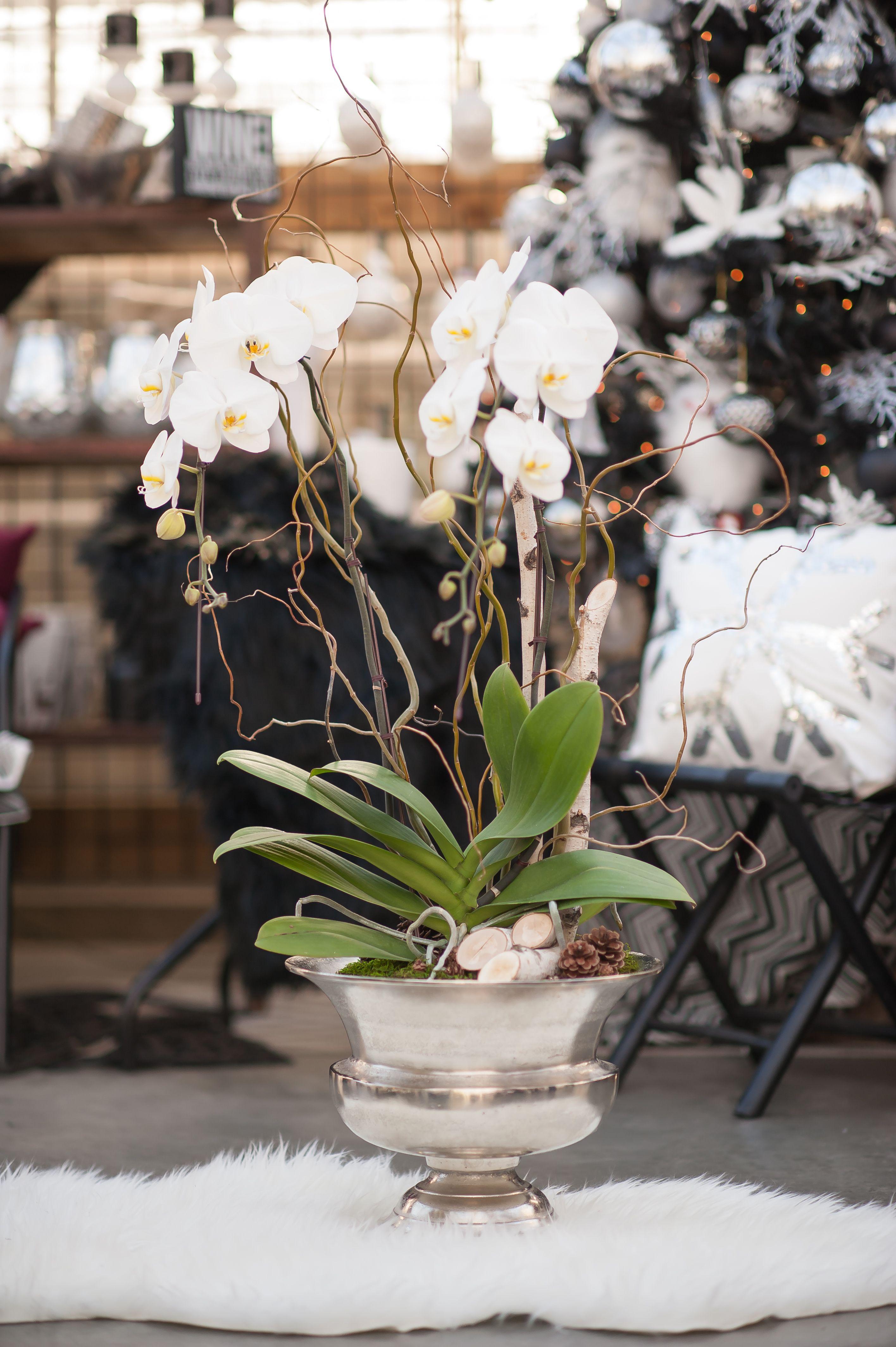 Opulent Orchid Urn Plant Centerpieces Orchid Centerpieces
