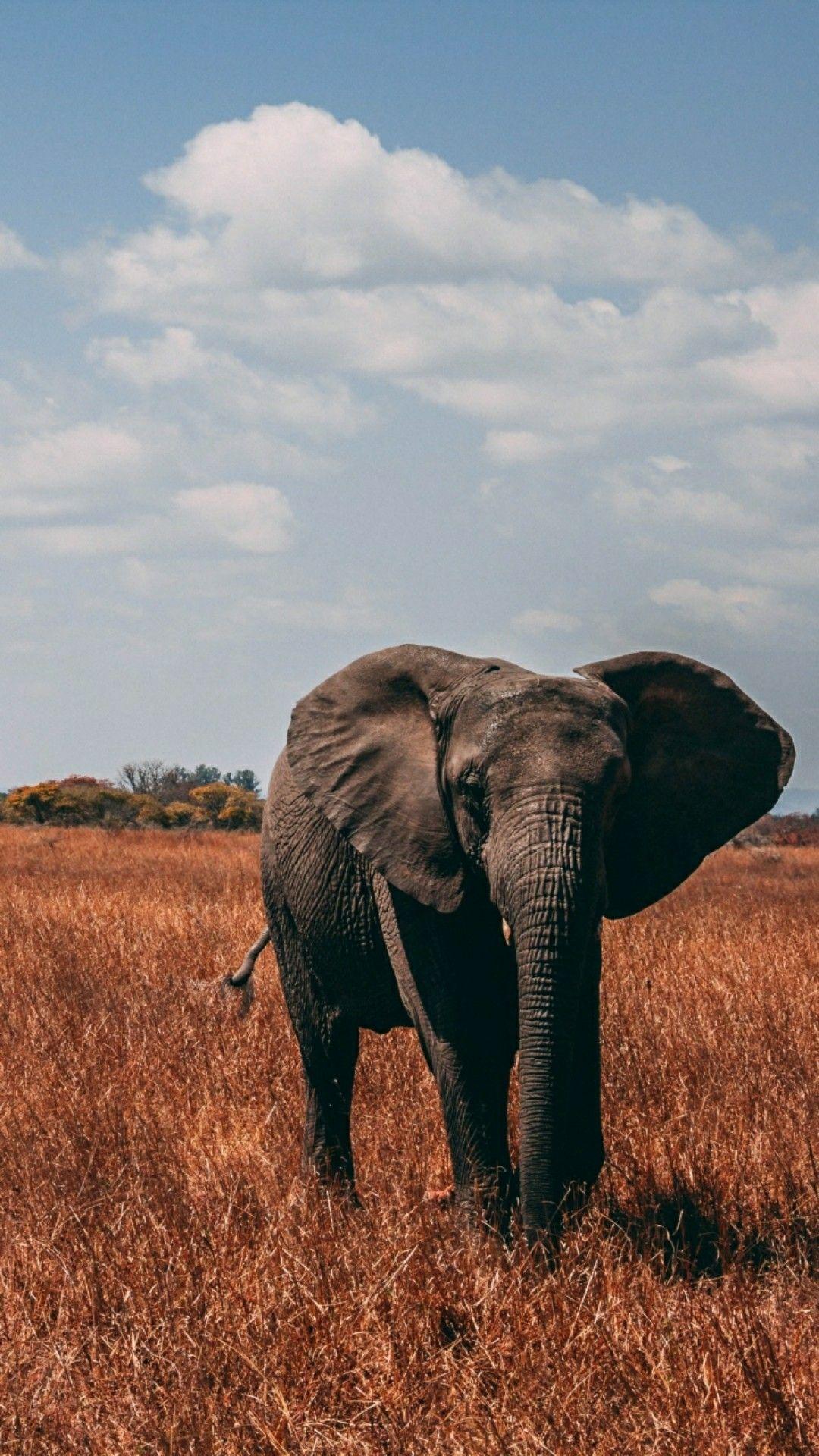 Elephant wallpaper | Elephant photography, Elephant ...
