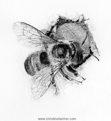 Bee Pencil Drawing Would Make Gorgeous Illustration Bee Sketch
