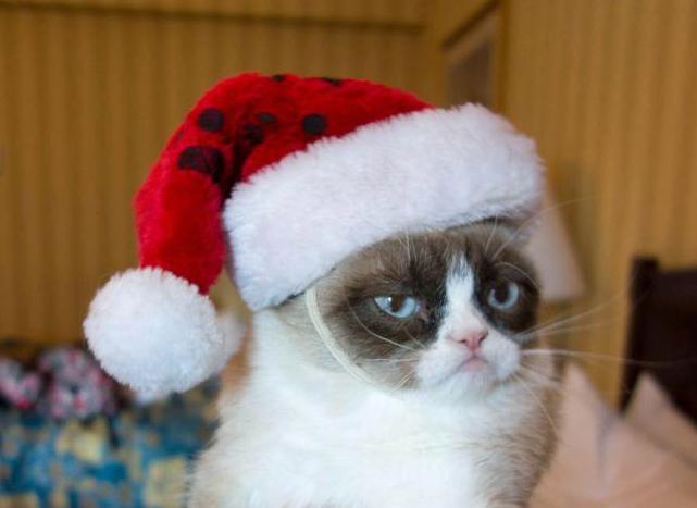 chat noel Résultats de recherche d'images pour « chat noël »   Cartes  chat noel