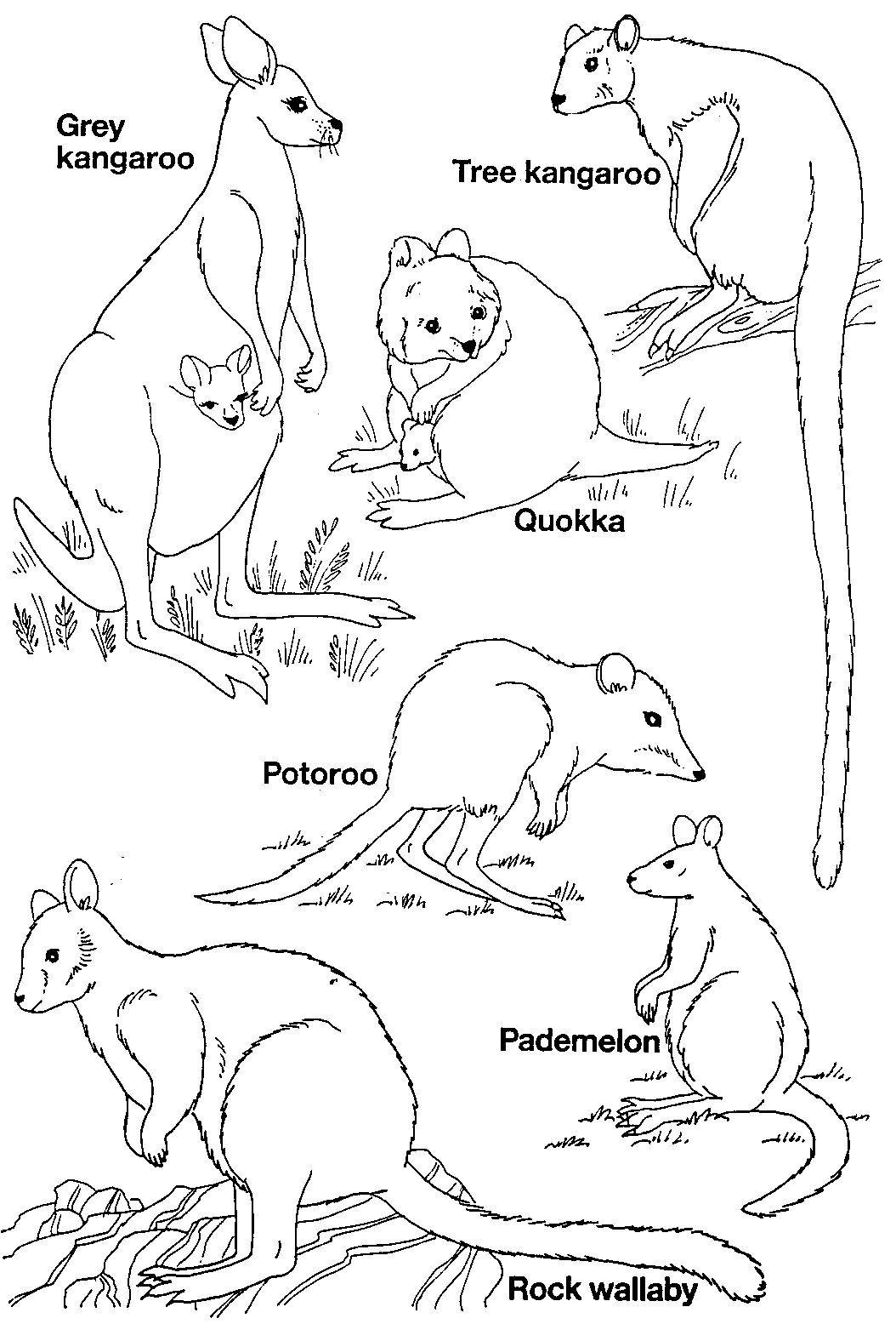 Australian Mammals Jpg 1054 1556 Australien Tiere Thinking Day Bilder