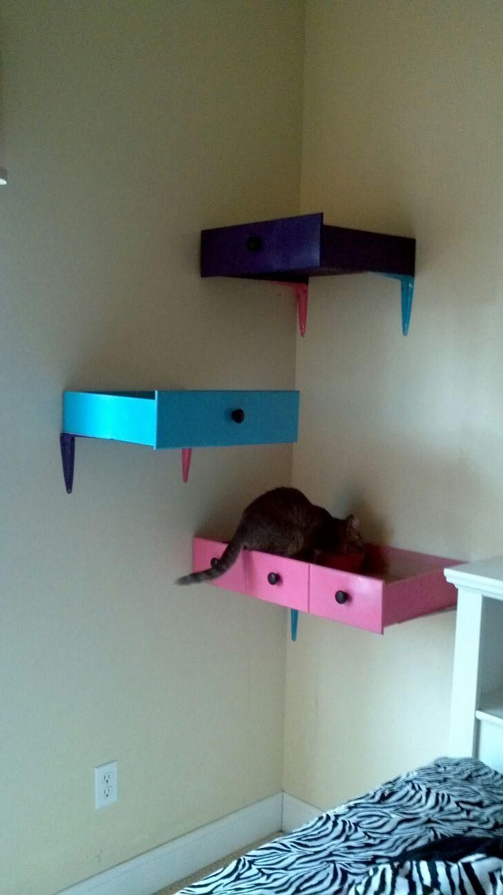 Old dresser drawers painted and mounted on wall in my girls bedroom for her cat to play in.
