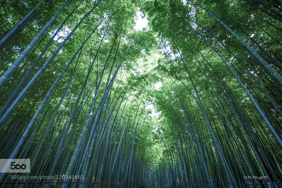 BAMBOO FOREST by IambongGee #nature