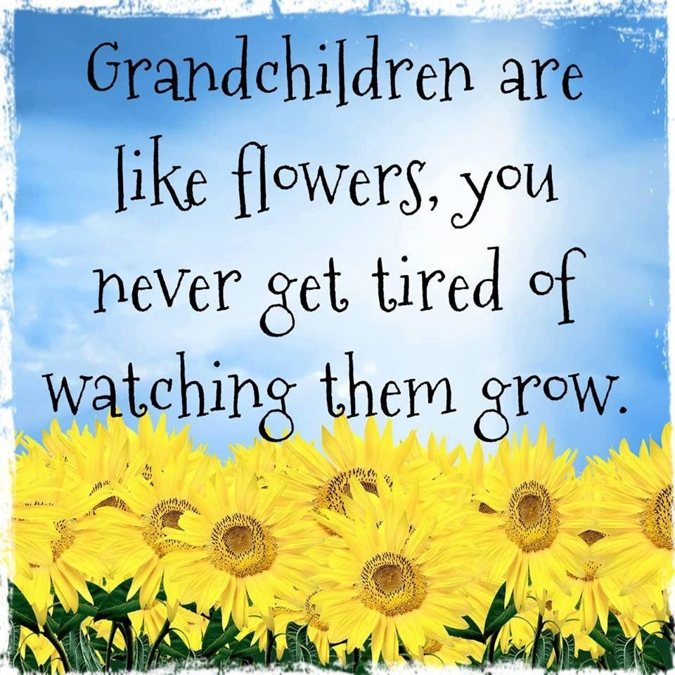Harley, you're getting so big! Grandkids quotes, Quotes