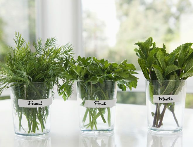 menthe la main verte garden garden plants et plants. Black Bedroom Furniture Sets. Home Design Ideas