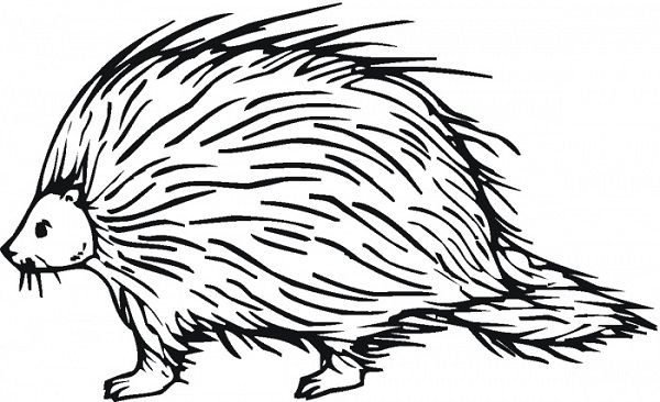 Porcupine Coloring Pages For Kids Abcs Drawing Clip Art Lembar Mewarnai
