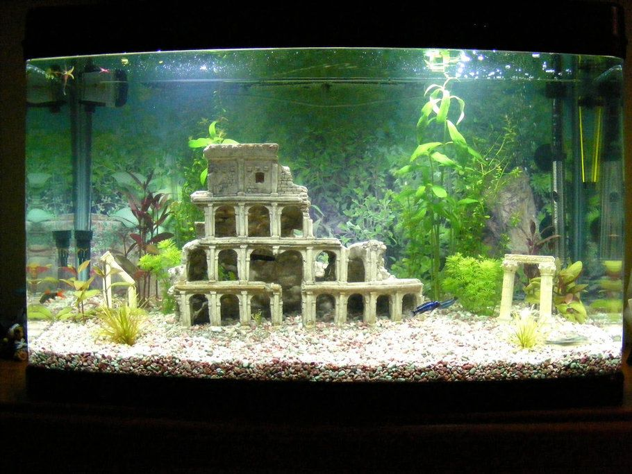Freshwater tropical aquarium with live plants and roman for Fish tank live plants