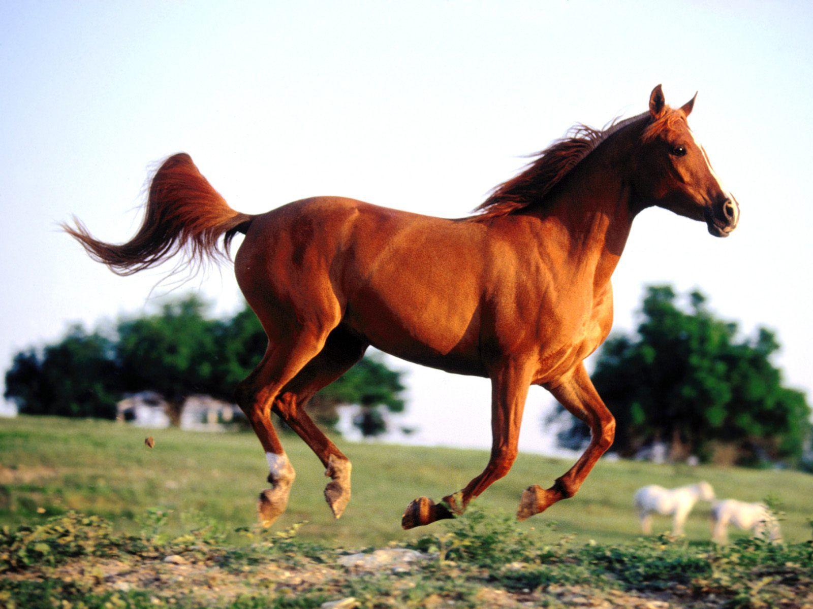 Must see Wallpaper Horse Spirit - 9a7fde928dc8cd7adddb55b8067ee6a1  HD_879888.jpg