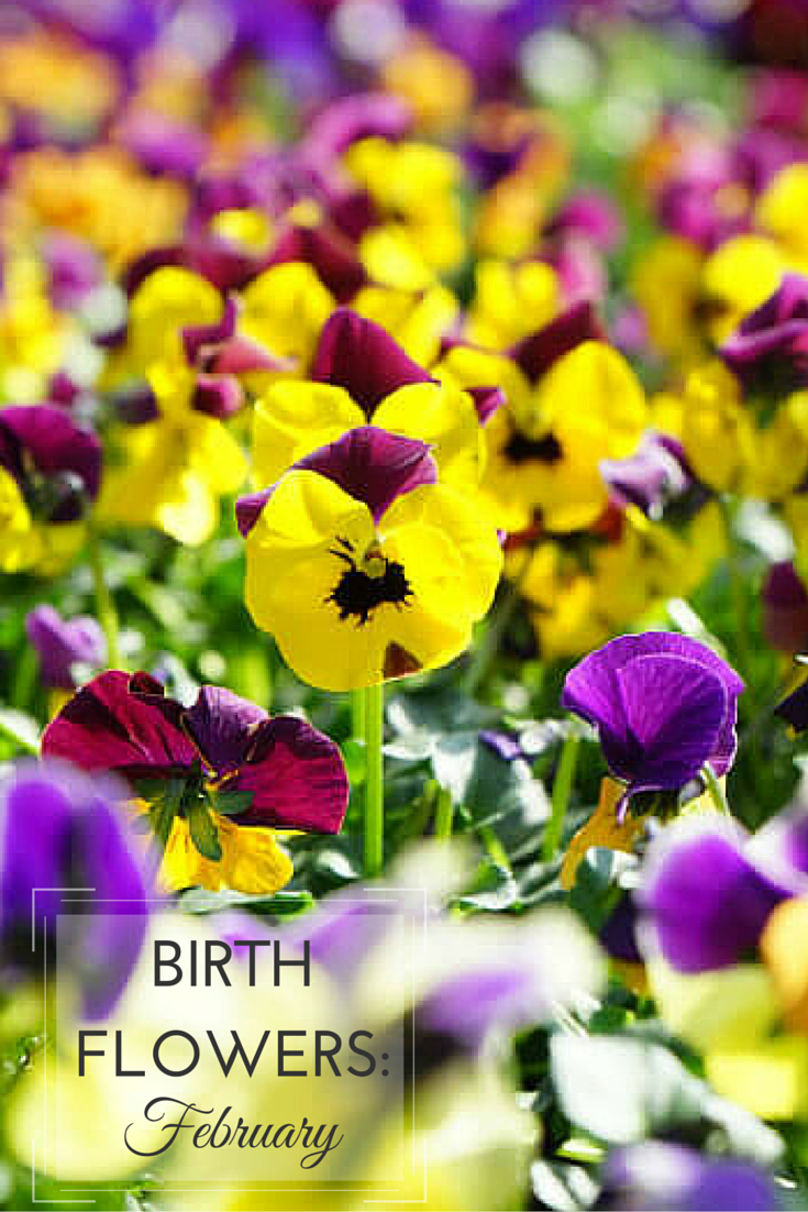 February Birth Month Flower New House Designs