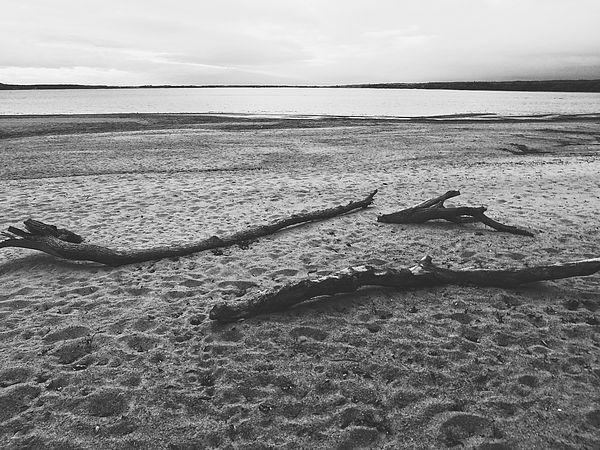 Black and white photography nature photography art for sale home decor wall art beach nature art my photography for sale pinterest nature