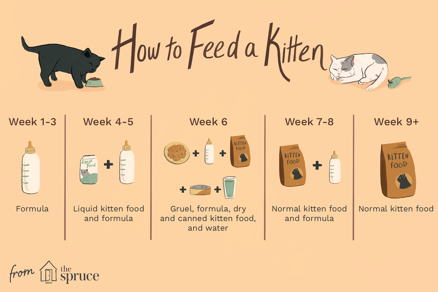 Kitten Feeding Schedule How Much To Feed Your Growing Kitten In 2020 Feeding Kittens Pregnant Cat Pet Care Cats