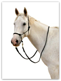 The Natural Click bitless bridle