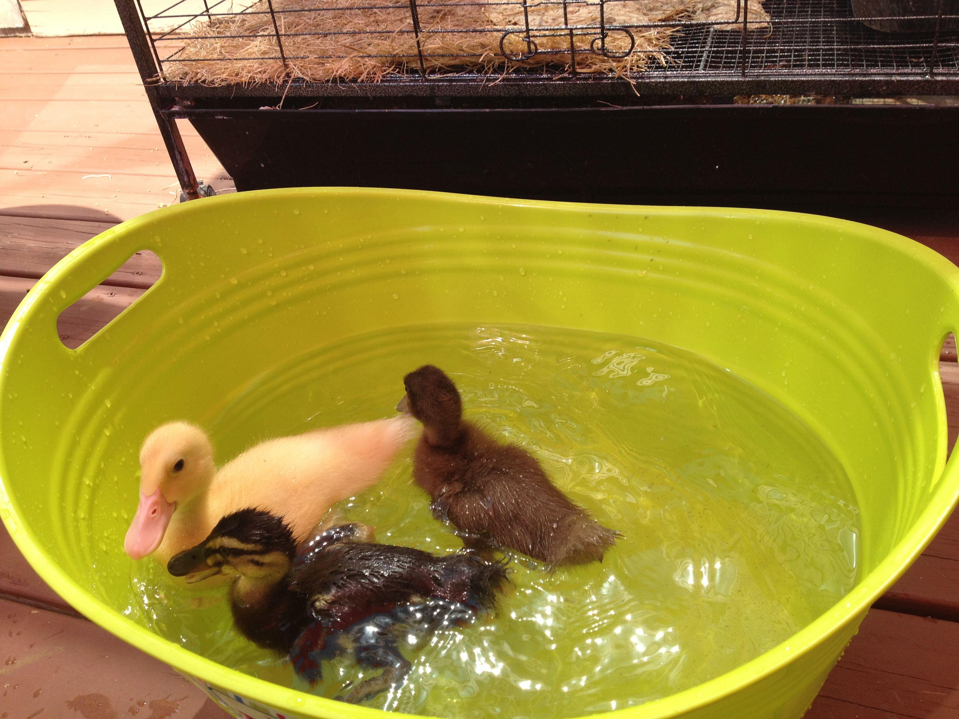 Ducklings in a bucket :)