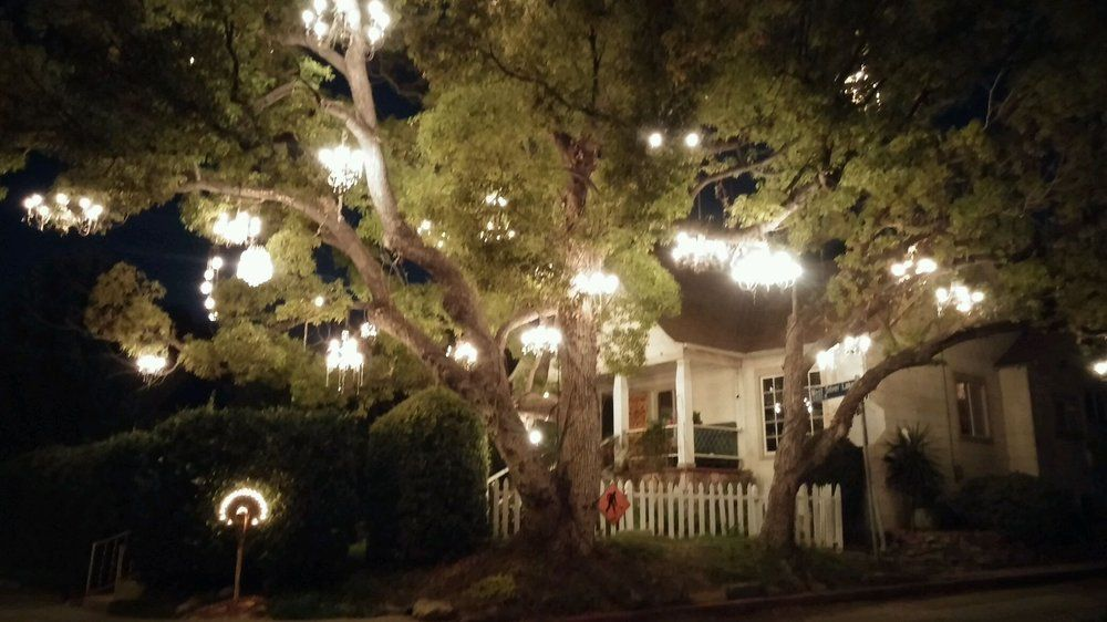Chandelier Tree - Silver Lake - Los Angeles, CA   Yelp   Love it ...