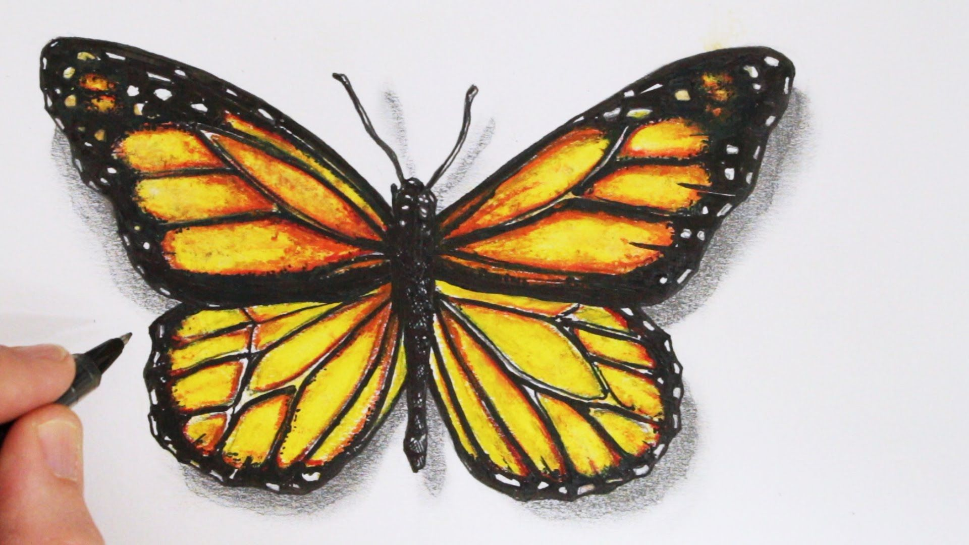How to draw a realistic butterfly time lapse youtube gardening
