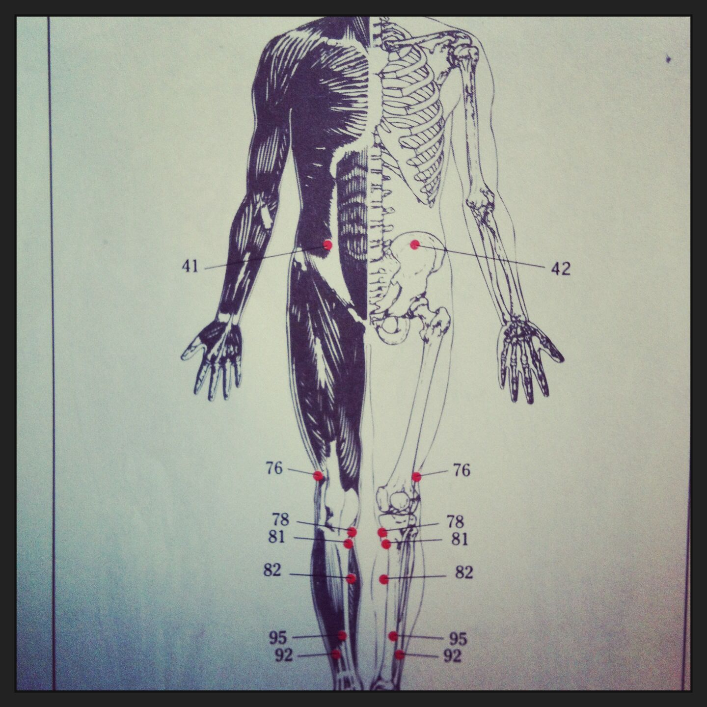 anatomy #lifedrawing #modeldrawing #study #student #course #skeleton ...