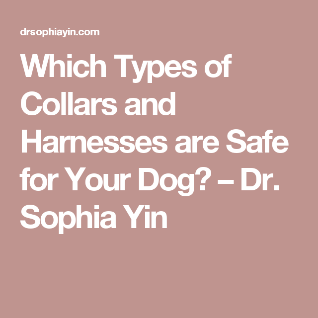 Which Types of Collars and Harnesses are Safe for Your Dog? – Dr. Sophia Yin