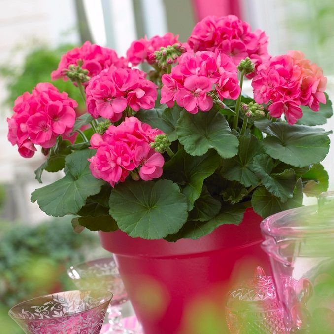 22 Best Flowers For Full Sun Heat Tolerant Flowers For Containers Full Sun Flowers Container Flowers Heat Tolerant Flowers