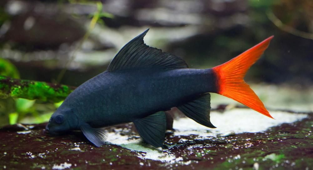 10 Best Clean Up Crew Ideas For Freshwater Aquariums In 2020 Freshwater Aquarium Fish Tropical Fish Aquarium Aquarium Fish