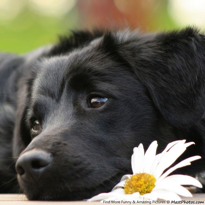 Most Inspiring Sad Black Adorable Dog - 9a859f2678a473e81efbb455725dbbba  Trends_3658  .jpg