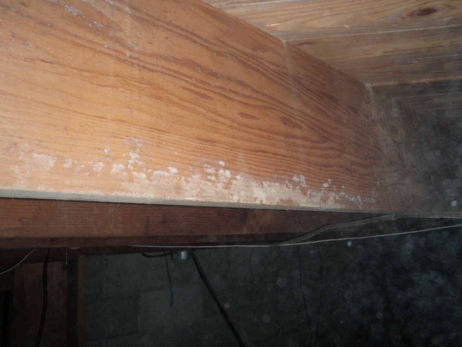 Best Of Mold On Wood In Basement