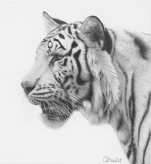 Pin di silvia coluccio su bianco e nero bianco e nero animali e tigrotti for Disegni di cavalli a matita