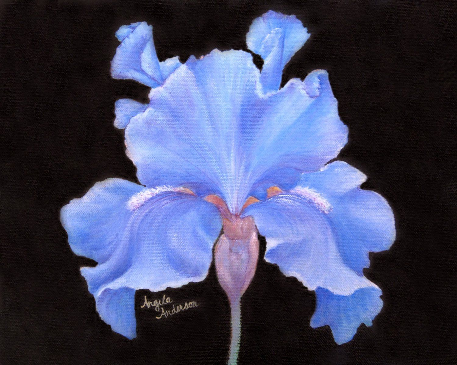 Watch for the flowers on a black background acrylic paintings learn how to paint irises with acrylics artist angela anderson shows step by step how to create this colorful iris flower painting izmirmasajfo