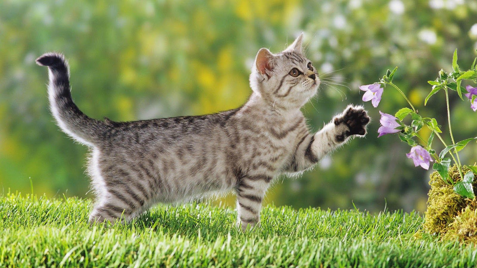 Cute Cat Pictures Kittens Playing Cat Feline Pet Friendly Cleaners