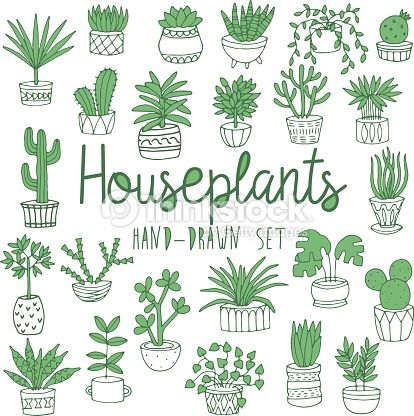 house plants drawing. wektor hand drawn line set of houseplants in pots house plants drawing pinterest