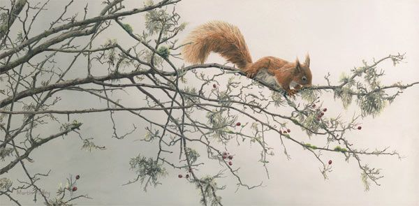 "Oil painting of a red squirrel, ""Out on a Limb"""