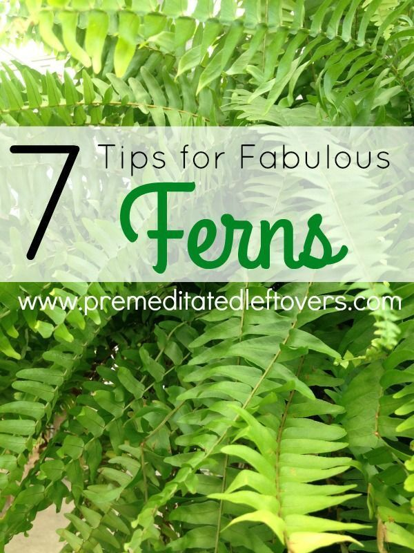 Tips For Growing Fabulous Ferns In Your Garden Ferns Can Be A Tad