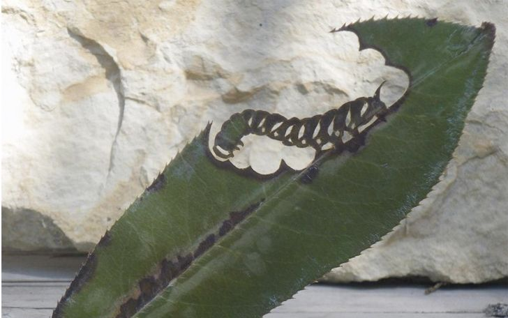 oruga-detail.jpg (728×456)