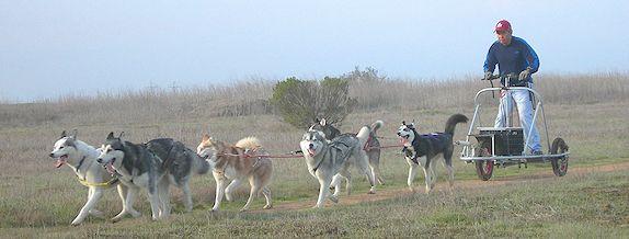 Dog Training North Pole Ak