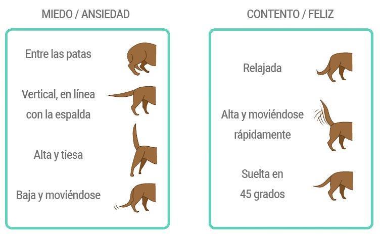 Lenguaje Canino Lo Que Te Cuenta La Cola De Tu Perro Blog Snau Lenguaje De Los Perros Perros Adiestramiento Perros