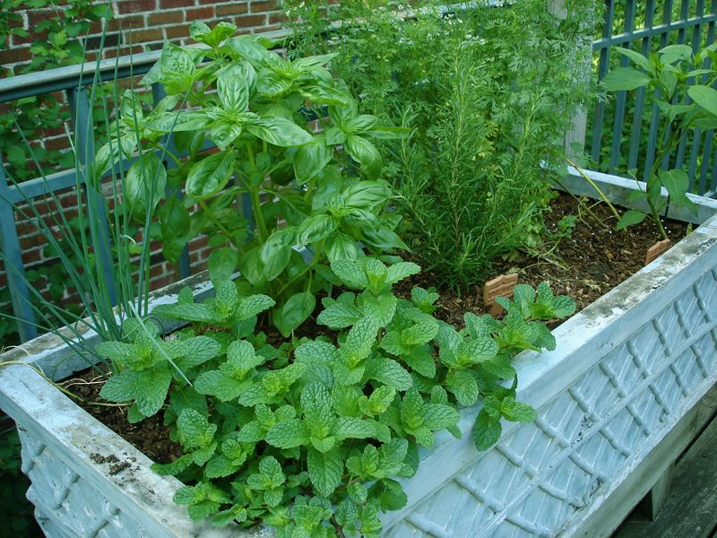 A Collection Of Herbs Growing In Pots You Can Also 640 x 480