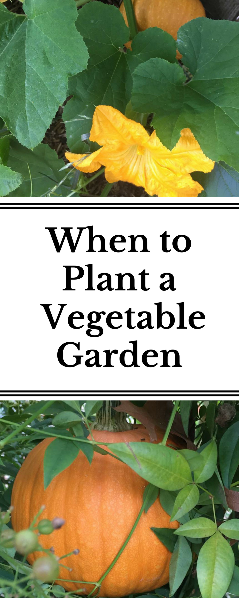 Learn The Best Time To Plant Vegetables Based On Your Growing Zone!