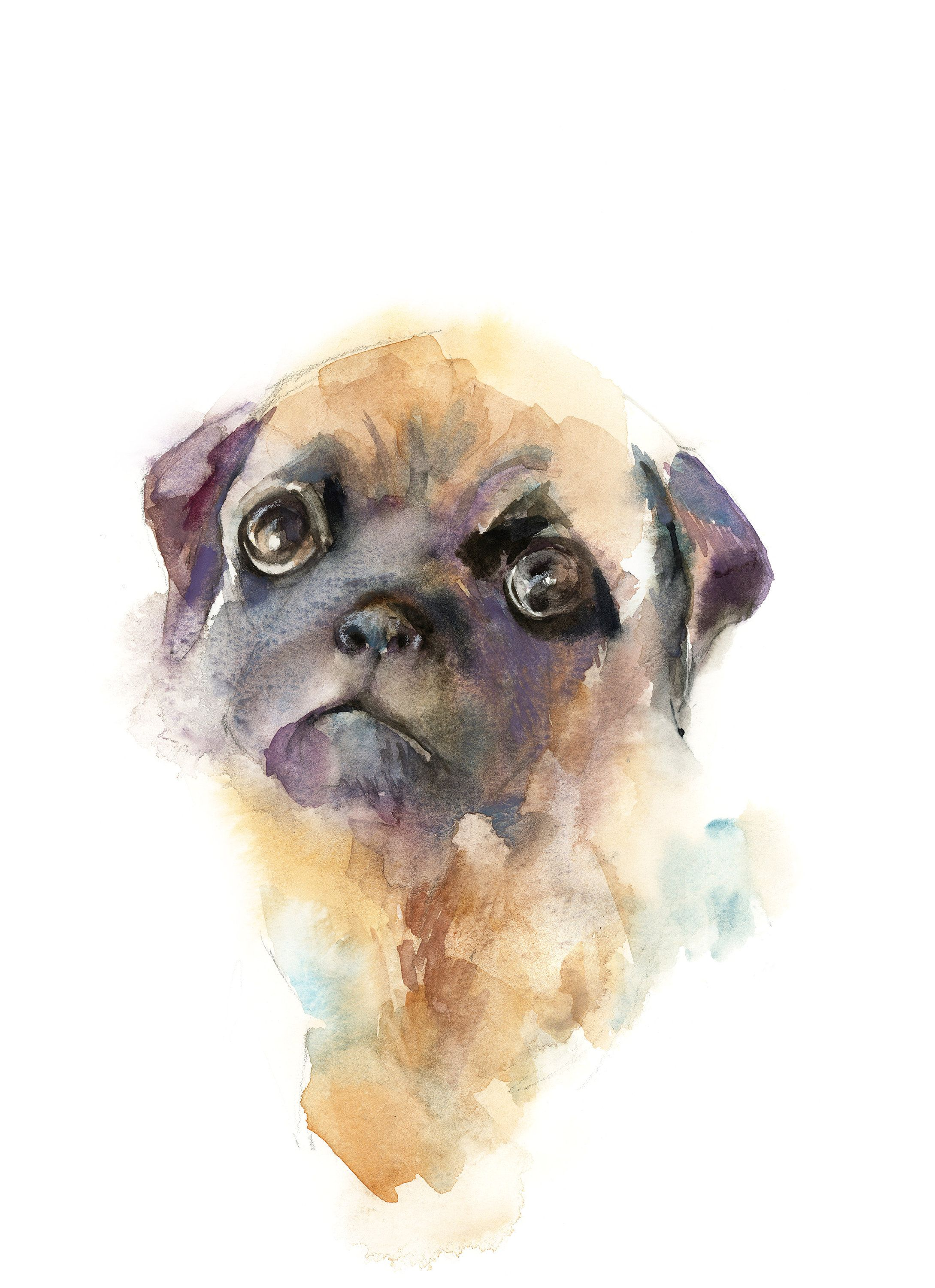 Pug Dog Original Watercolor Painting Loose Style Colorful Bright