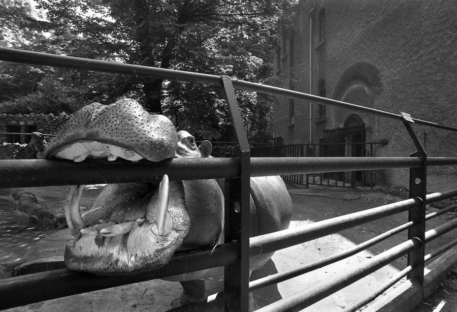 Francesco Radino Photographer Zoo di Milano Altri