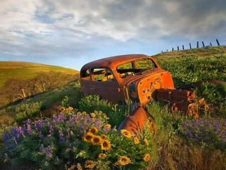 Beautifully Forever Alone With Images Abandoned Cars Cool Pictures Rusty Cars