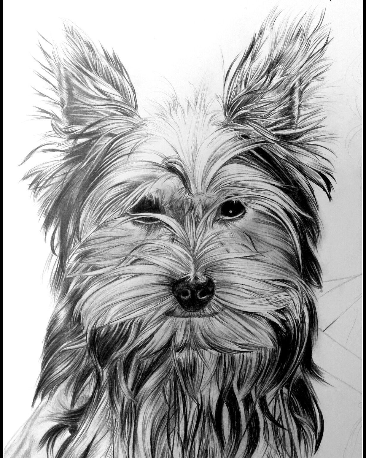 Dessin r aliste animaux chien au crayon portraitiste - Animal dessin ...