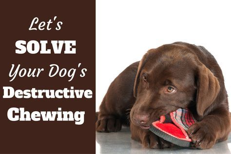 How to Stop a Puppy or Dog From Destructive Chewing (With