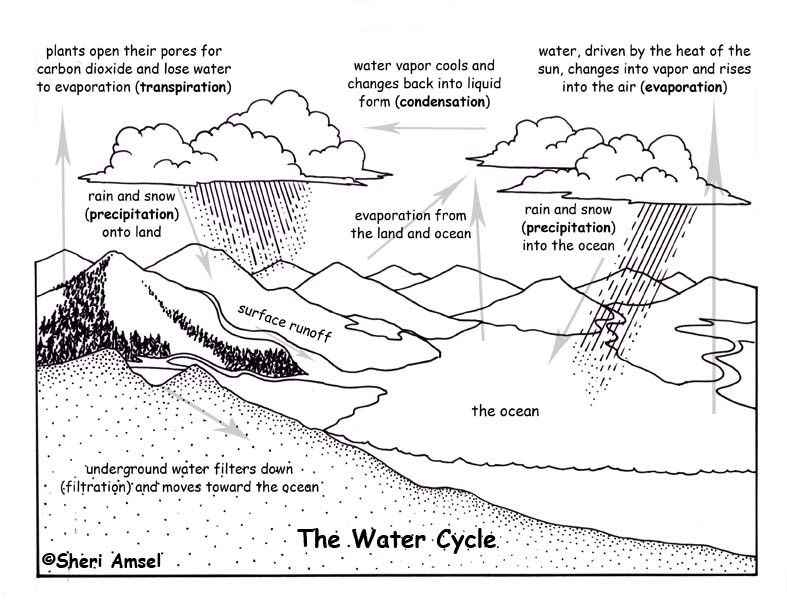 Water Cycle Diagram to Label Beautiful Water Cycle in 2020 ...
