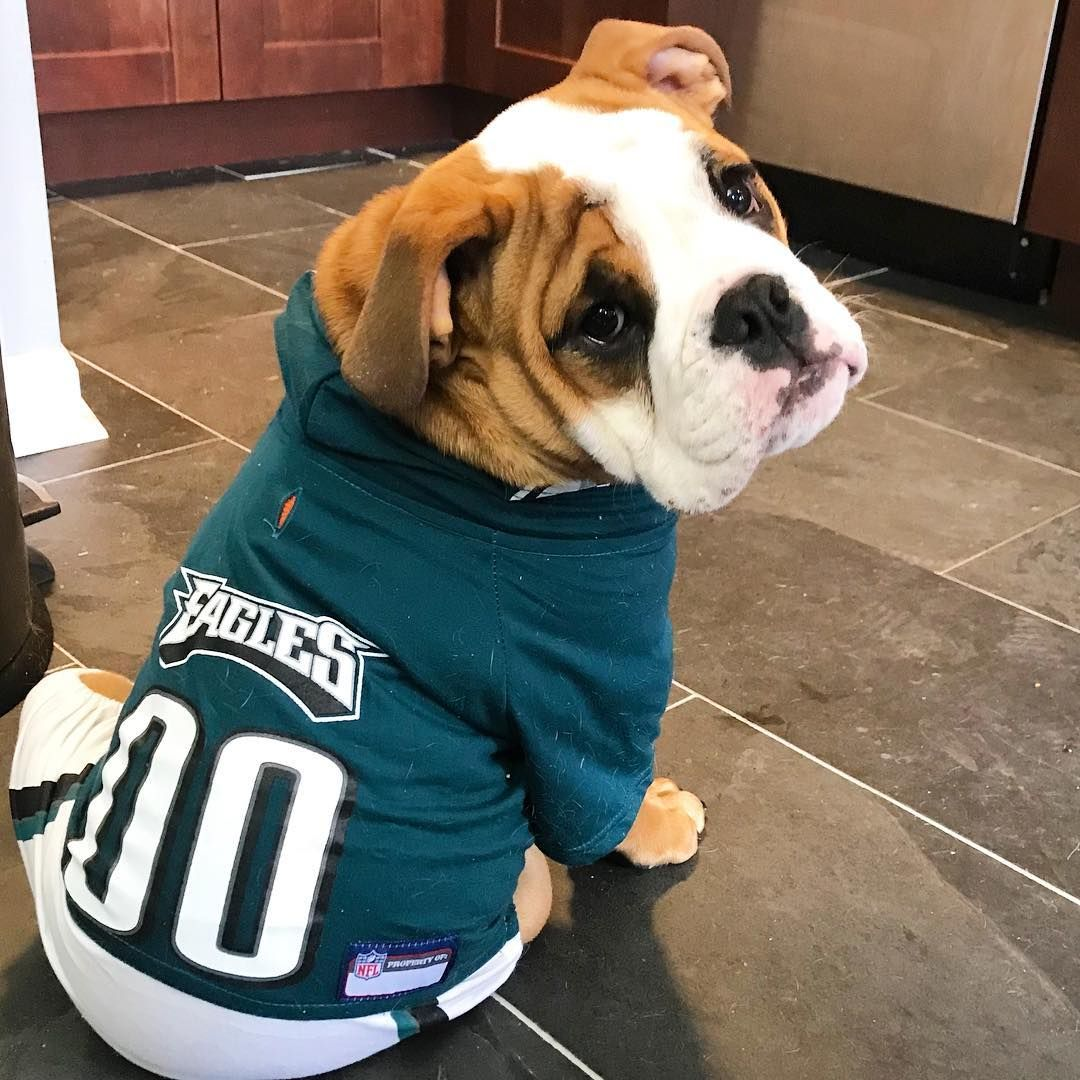 E A G L E S Gobirds Eagles Puppypants Puppy Phillypuppy
