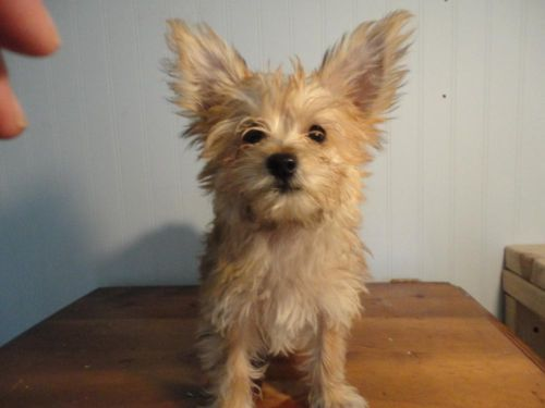 Dogs Puppies For Sale In Boston Ebay Classifieds Kijiji Page 1 Puppies Cute Dogs Dogs And Puppies