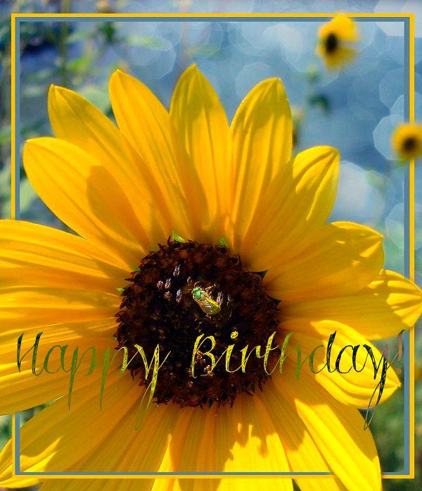 Happy birthday … | BIRTHDAY WISHES | Happy…