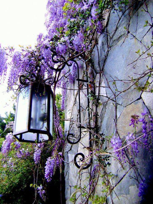 5 supports pour plantes grimpantes auxquels vous n 39 auriez jamais pens lampadaire de jardin - Support plantes grimpantes ...